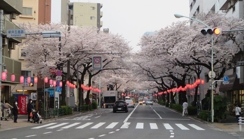 2018.03.27桜の様子